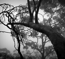 Scary Trees- Belair National Park. by Ben Loveday