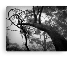 Scary Trees- Belair National Park. Canvas Print