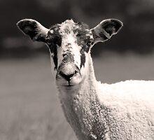 Speckled Faced Sheep by AndyLanhamArt