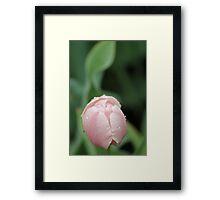 Flower in rain Framed Print