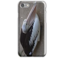 Pelican Sitting On the Ground iPhone Case/Skin