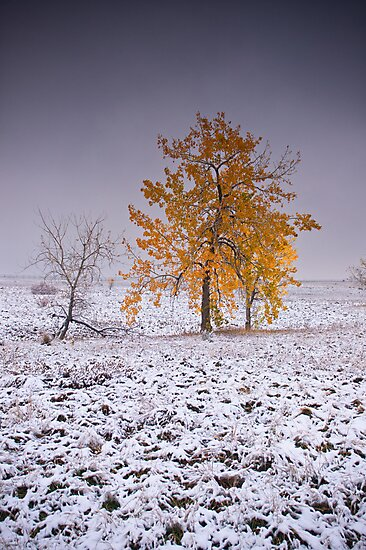 Warrior Of The Cold by John  De Bord Photography