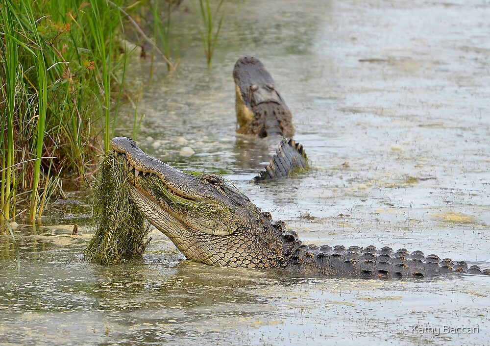 Bellowing Alligators by Kathy Baccari