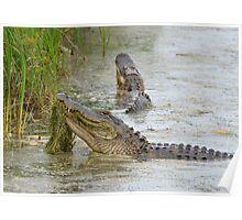 Bellowing Alligators Poster