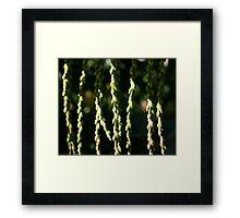 Natural Curtain Framed Print