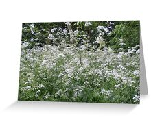 White frothy flowers Greeting Card