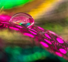 Feather Drop by Debbie Cato