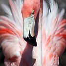 Pretty Flamingo by Sheryl Unwin