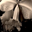 ORCHID #12 by Thomas Barker-Detwiler
