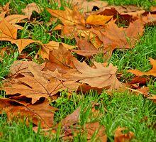 Autumn's Golden Grown by D-GaP