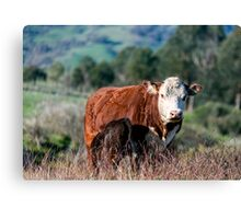 A Hereford's Lot Canvas Print