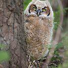 Peek-a-boo by jamesmcdonald