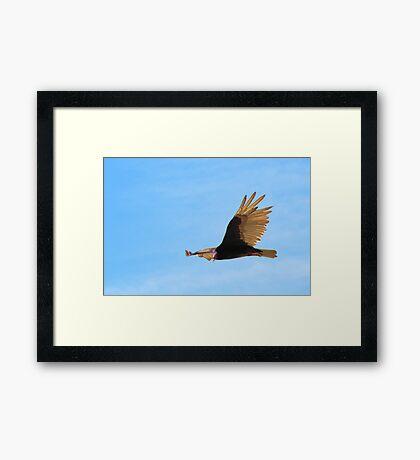 Vulture Framed Print