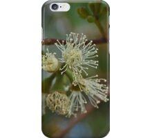 Gum Tree Blossom iPhone Case/Skin