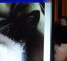 Caligula lurking behind wallpaper photo of my new kitten Zappa by redqueenself