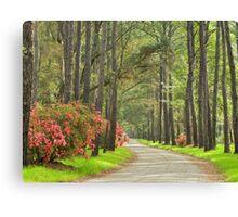 Plantation Road Canvas Print