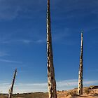 Husks of the Ghost Forest, Sleeping Bear Dunes by DArthurBrown