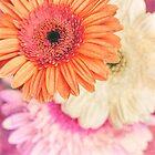 Sweet Daisy Sorbet by micklyn