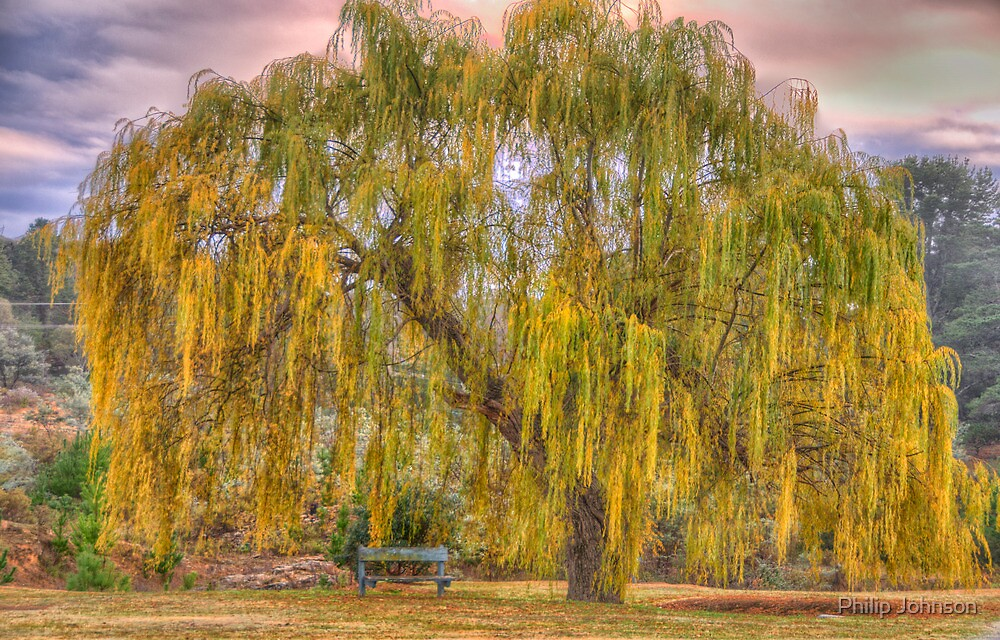 Just a Touch Of Shade - Hill End NSW - The HDR Experience by Philip Johnson