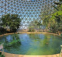 Shoes To Sky | Tropical Display Dome by NickVerburgt