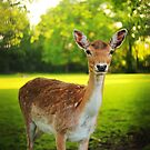 Little deer by Noukka Signe