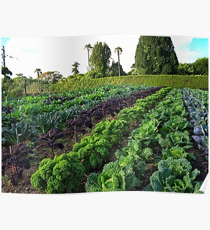 Vegetables in a field Poster