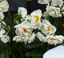 SMELL THE HEAVENLY SCENT OF THESE NARCISSI by paulasphotos101
