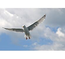 Wings Outstretched -  Lyme ,Dorset,UK Photographic Print