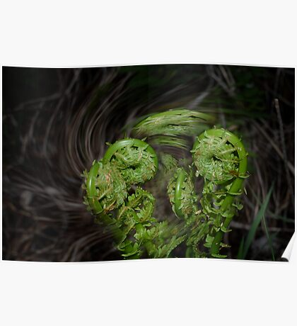Dance of the fiddleheads Poster
