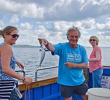 Mackerel Fishing Aboard The Marie F by Susie Peek