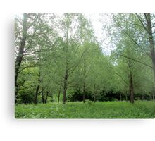 lovely willow trees Canvas Print