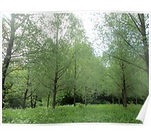lovely willow trees Poster