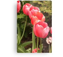 I have flower after flower for you Metal Print