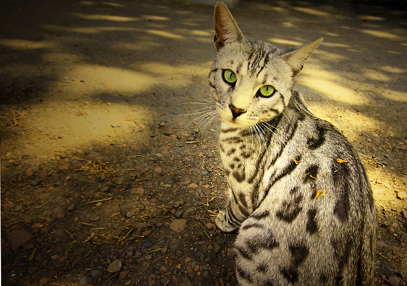 THIS BEAUTIFUL CAT by leonie7