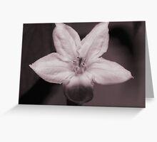 In Bloom Greeting Card