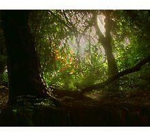 Blaise Woods Photographic Print