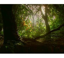 Blaise Woods Photographic Print
