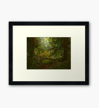 Forest Light Framed Print