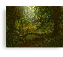 Forest Light Canvas Print