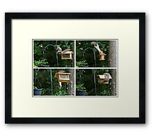 Learning the Ropes Framed Print