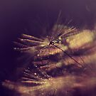 delicate sparkle by Ingz