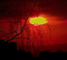Red Willow by Matt Sibthorpe