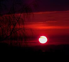 Red Dragon by Matt Sibthorpe