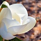 Wondrous White Magnolia by Dawne Dunton