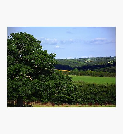 Devon Summer Photographic Print