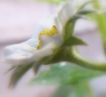 Strawberry Flower. by Livvy Young