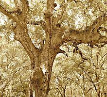 The Southern Live Oak by ©Dawne M. Dunton