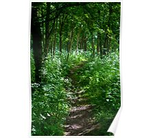 Woods Above Hayton Poster