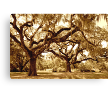 The Mighty Oaks Canvas Print