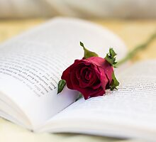 Book & Rose by june25thfoto